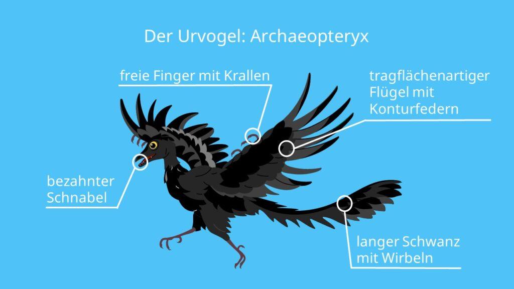 Archaeopteryx, skelett, brückentier, fossil, fliegen, bilder