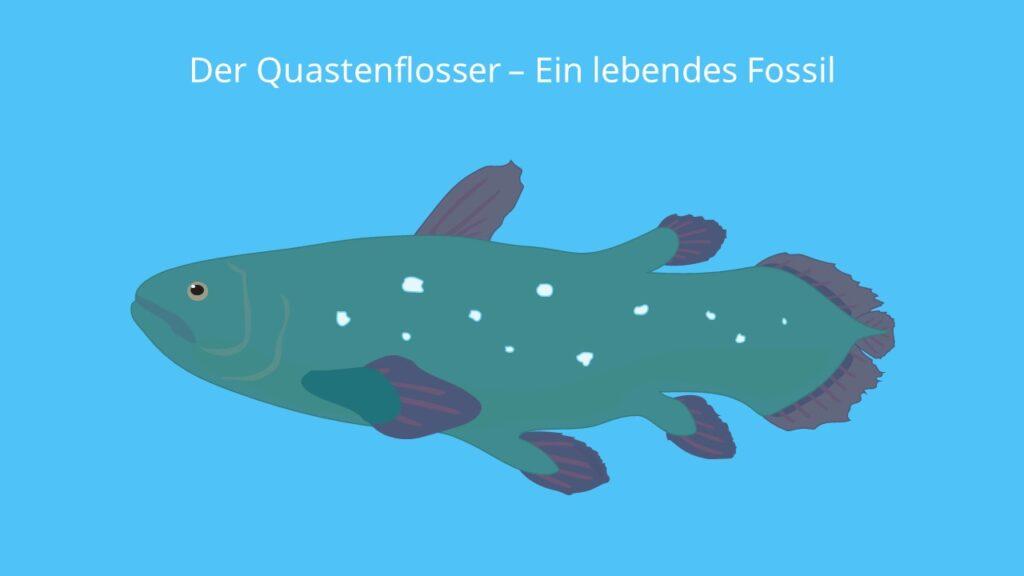 Der Quastenflosser - Ein lebendes Fossil, Latimeria, Quastenflosser, Latimeria chalumnae, coelacanth, quastenflosser fossil