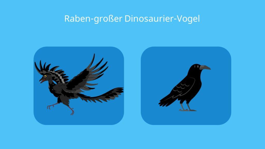 Archaeopteryx, dinosaurier, vogelmerkmale, reptilienmerkmale, rabe, bilder