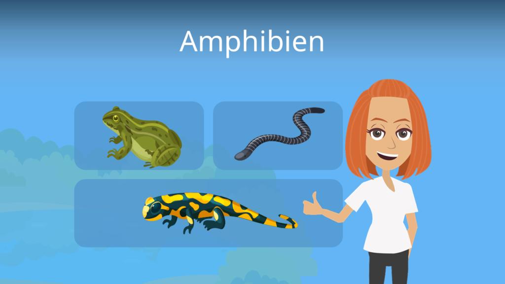 Zum Video: Amphibien