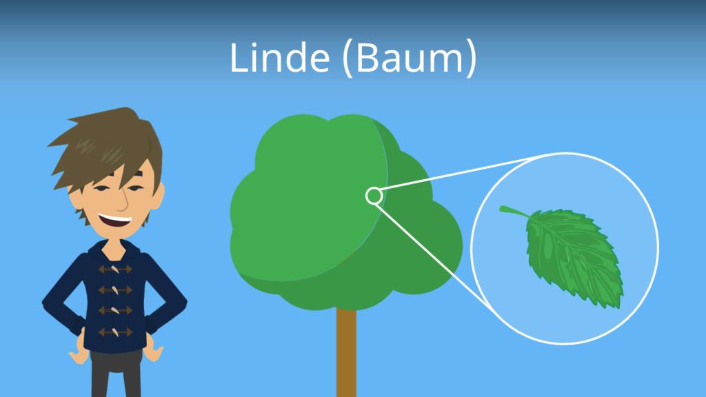 Zum Video: Linde (Baum)