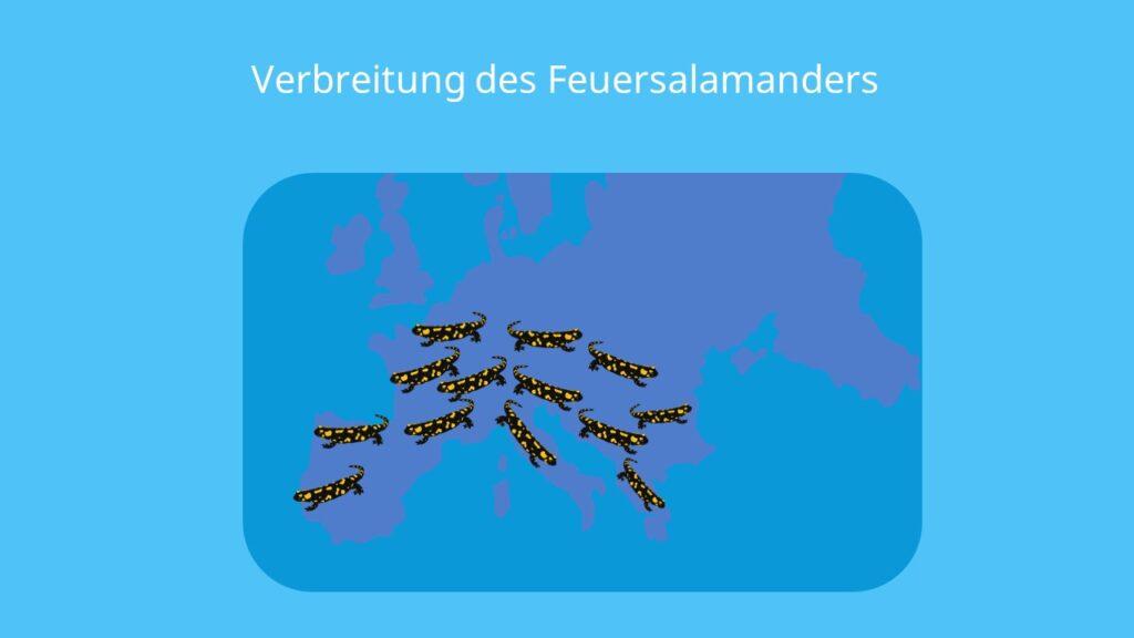 salamander deutschland, salamander in deutschland, salamanderarten deutschland, feuersalamander lebensraum, salamandra
