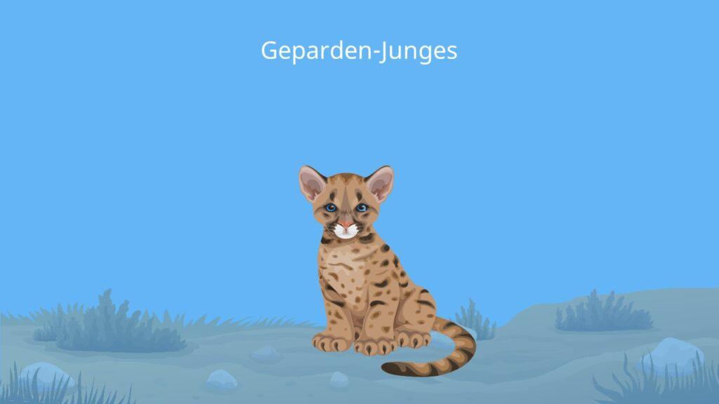 Gepard Baby, baby gepard, gepard fell, wie sieht ein gepard aus