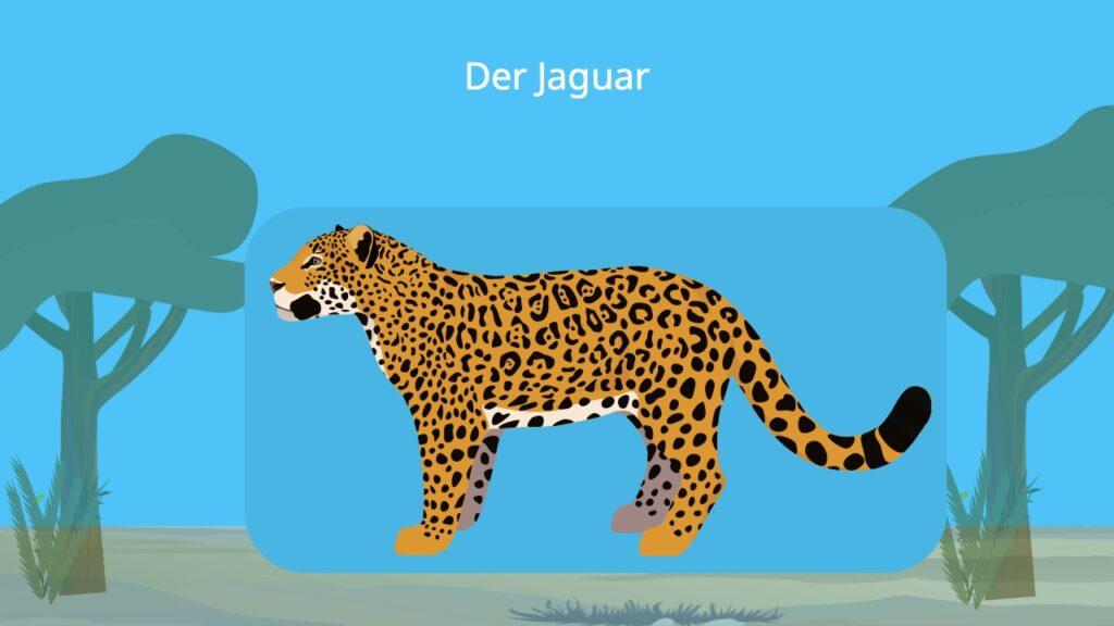 jaguar, jaguar tier, jaguar katze, raubkatze, panthera onca