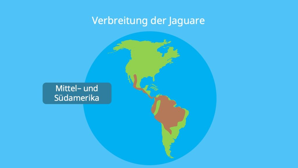 Jaguar Verbreitung, jaguar vorkommen, wo leben jaguare, jaguar lebensraum, panthera onca, wo lebt der jaguar
